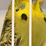 DM 2005 - Jels - fuglene